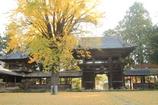 銀杏とお寺(^^)