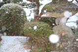 雪ぼうろ(^^♪
