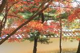 小さい秋(^^♪