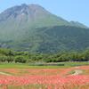 平成新山とポピーの花畑(^^)/