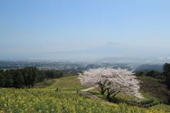 春の白木峰高原(^^)/