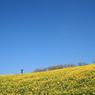 春色の白木峰高原
