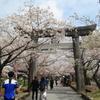 桜満開Ⅱ(^^)/