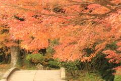 晩秋の紅葉(^^)/