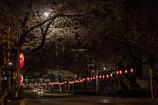 満開の桜トンネルの踏切
