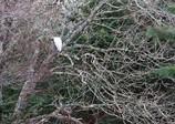 シロサギと樹