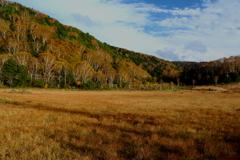 田の原湿原