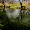 蓼川の流れ