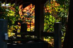 鶴岡八幡宮 白旗神社(DSC02661)