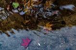 水の中の秋色