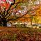 天と地の秋