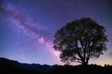 一本木と天の川