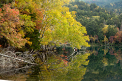 オンネトー湖の秋