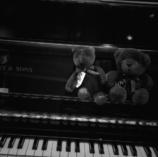 幼い熊たち