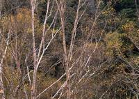 HASSELBLAD 501CMで撮影した(晩秋の尾瀬)の写真(画像)