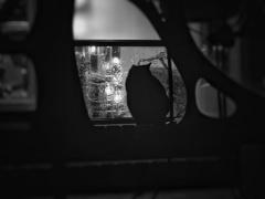 路地裏に棲む黒猫