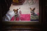 幼い犬たち