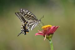 花と蝶CDIX!