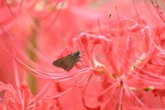 花と蝶CCCLXXVIII!