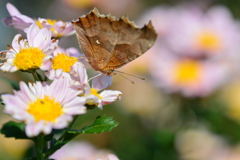花と蝶CXXXIII!