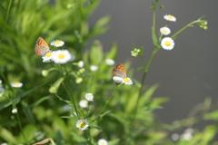花と蝶CCXV!