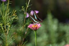 花と蝶CCCXCI!