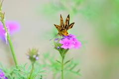 花と蝶CCXXXVIII!