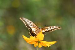 花と蝶CCCXLI!