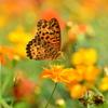 花と蝶LXII!