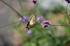 花と蝶CCCLVII!
