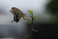 花と蝶CCXXI!