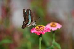 花と蝶CCCXC!