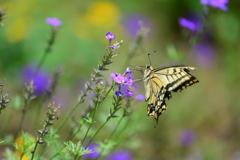 花と蝶CCIV!