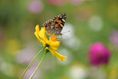 花と蝶CCCLIII!