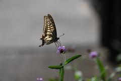 花と蝶CDXIX!