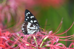 花と蝶CCCLXVI!