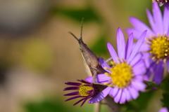 虫・昆虫と花XXXI!