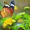 花と蝶XXV!