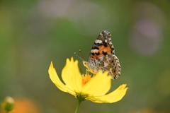 花と蝶CCCLIV!