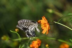 花と蝶CCCXCVII!