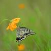 花と蝶LXXVII!