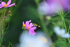 花と蛾VIX!
