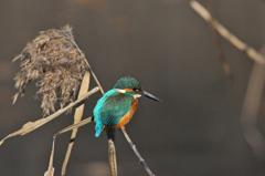 里山の野鳥XXI!