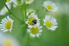 虫・昆虫と花XLII!
