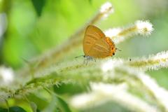花と蝶CCI!