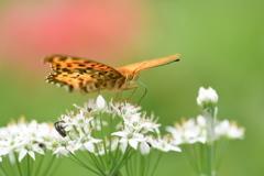花と蝶CCCLXXIX!