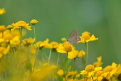 花と蝶LXXV!