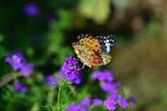 花と蝶CCXXX!
