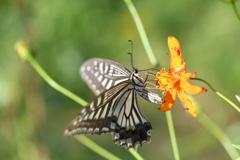 花と蝶CCCXCIX!