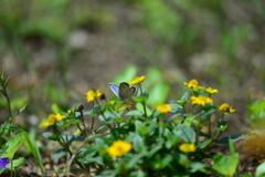 花と蝶CC!